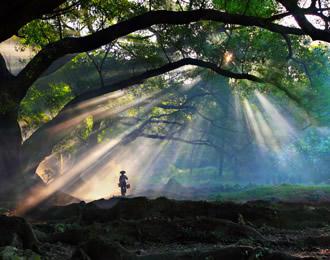 为什么榕树能独木成林