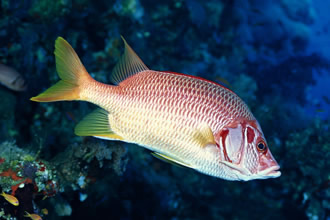 为什么鱼的身上会有黏液
