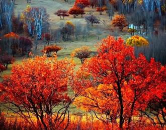 为什么有的树叶秋天会变红