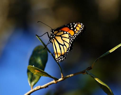 蝴蝶可以做到没有声音得飞舞